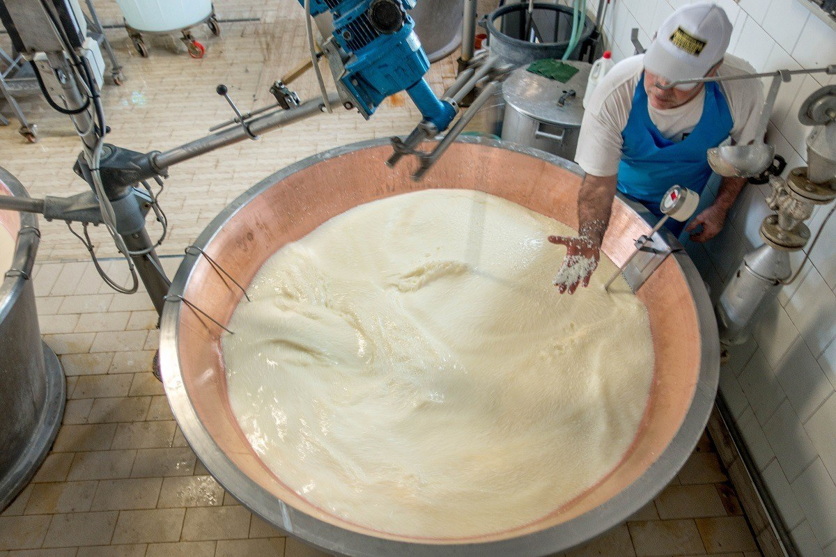 Parmigiano-Reggiano curds forming from a vat of milk