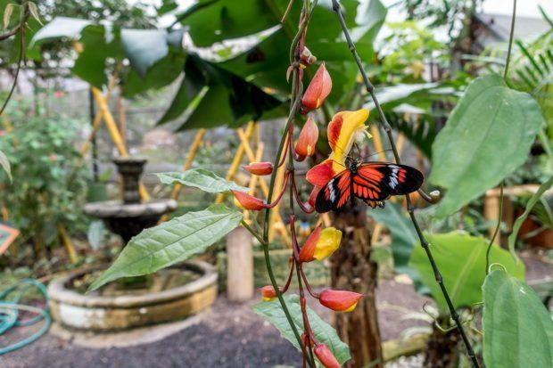 Orange butterfly at a butterfly farm in Mindo. Just one of the unexpectedly cool stops on our Ecuador itinerary.