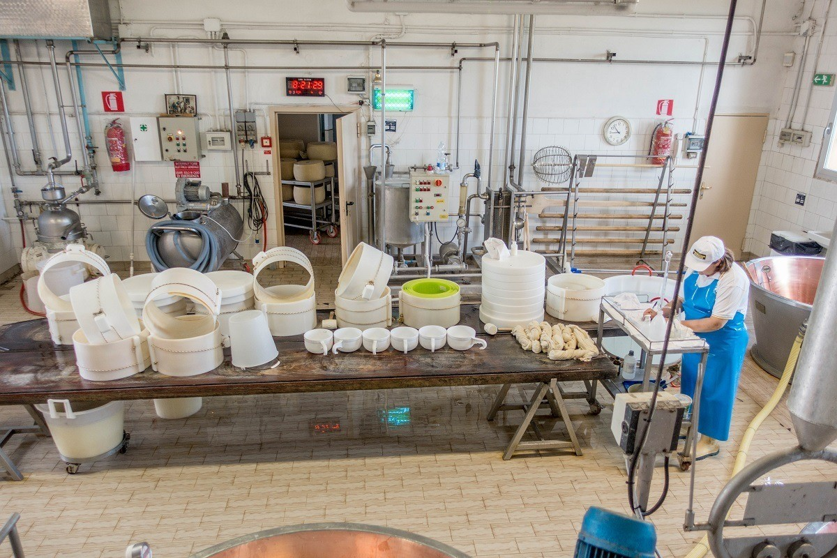 Cheese maker preparing equipment for the day