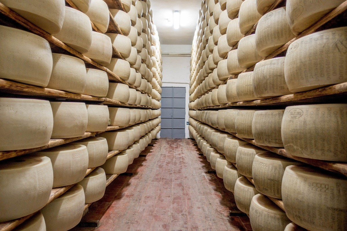 Wheels of Parmigiano-Reggiano aging at a dairy in Parma, Italy