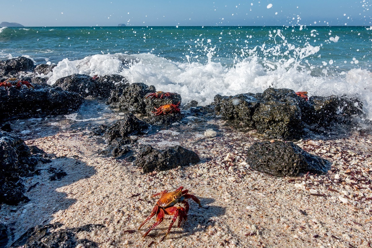 Sally light-foot crabs. It's important to smartly pack for the Galapagos to have what you need to see these animals.