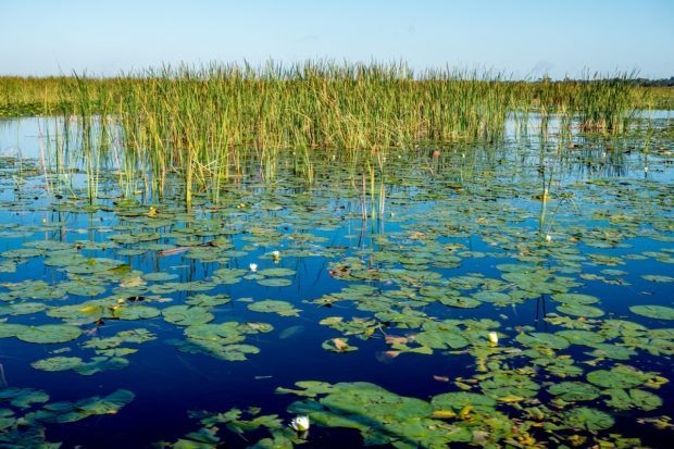 The headwaters of the Everglades is one of the fun places to go near Orlando, Florida