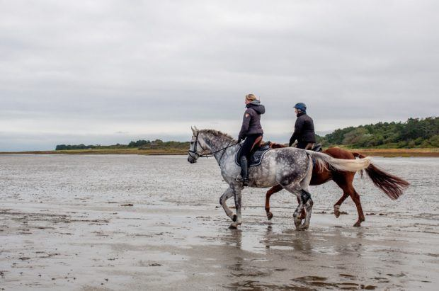 A couple ride horses out on the salt flats of the Wadden Sea.