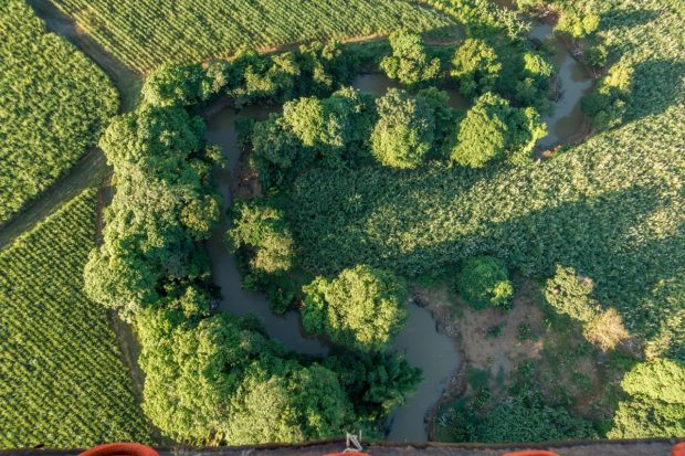 Trees look like broccoli from overhead in a hot air balloon Punta Cana