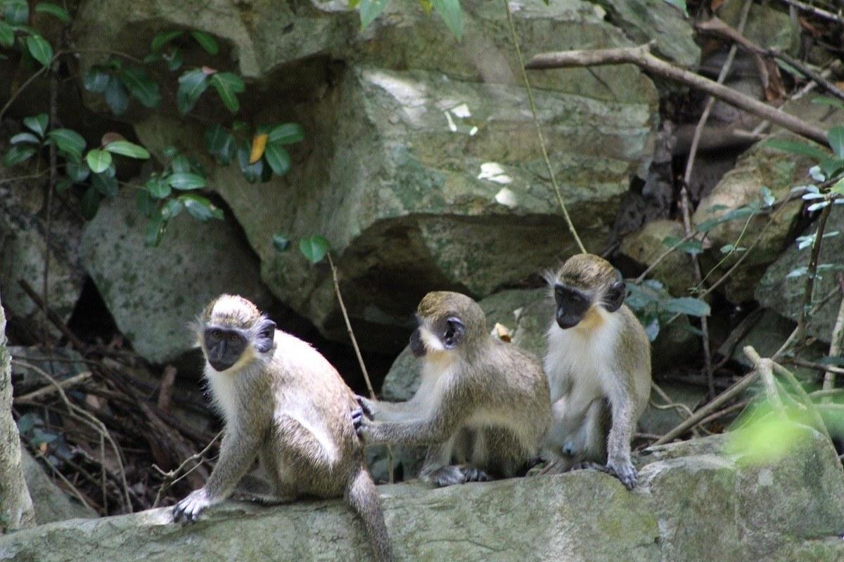 Wildlife in Saint Martin.