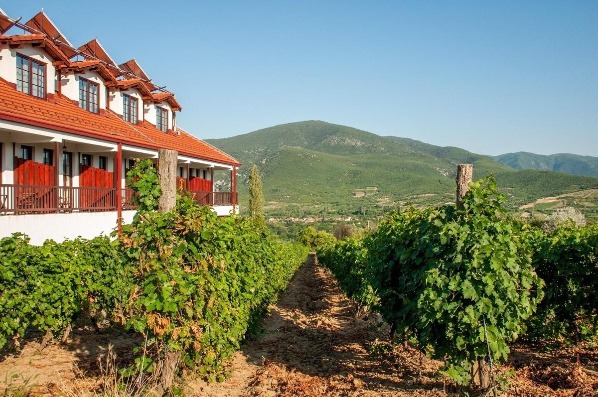 Rows of grape vines at the Popova Kula winery in North Macedonia
