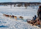 Dog sledding in Tromso, Norway