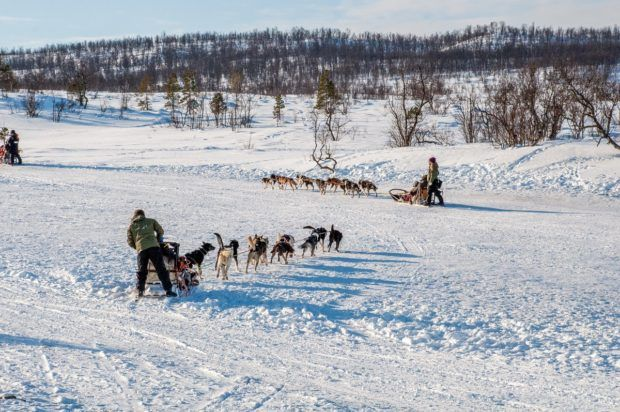Dog sleds zooming across the Norwegian landscape