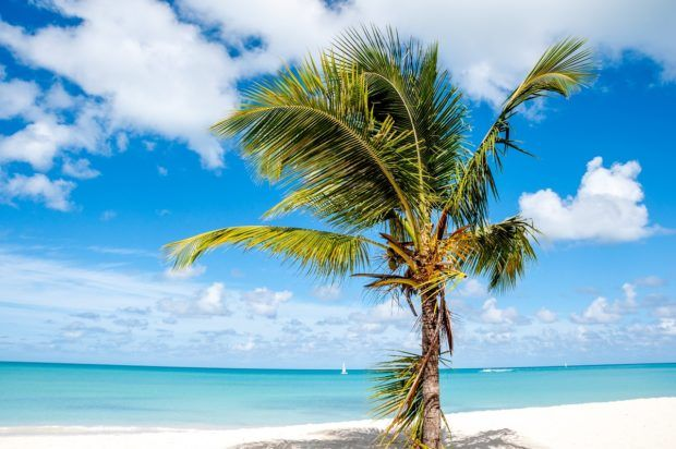 A single palm tree on a beautiful beach in Antigua