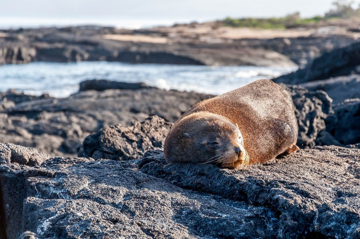 Great camera gear and shoes for rugged terrain were on our Galapagos packing list so we could capture images like this