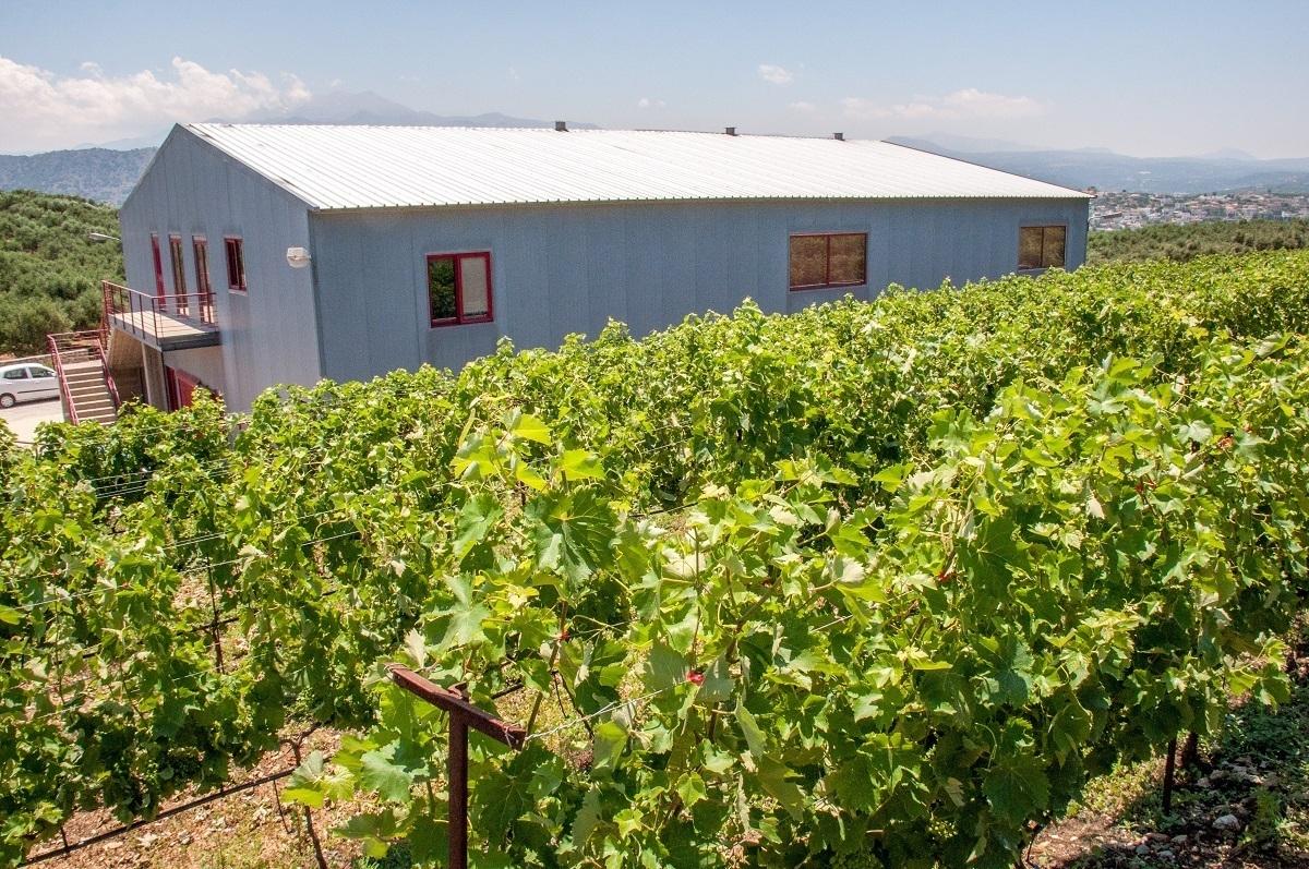 Klados Winery produces organic Cretan wines