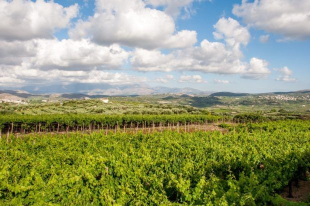 Vineyards and tasting rooms are some of the best places on Crete to try local wine