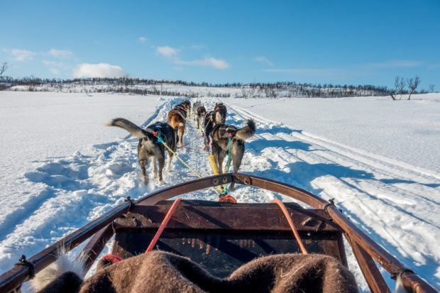 Winter is the best time to see the northern lights in Norway, which is also the best time to go dog sledding in Tromso!
