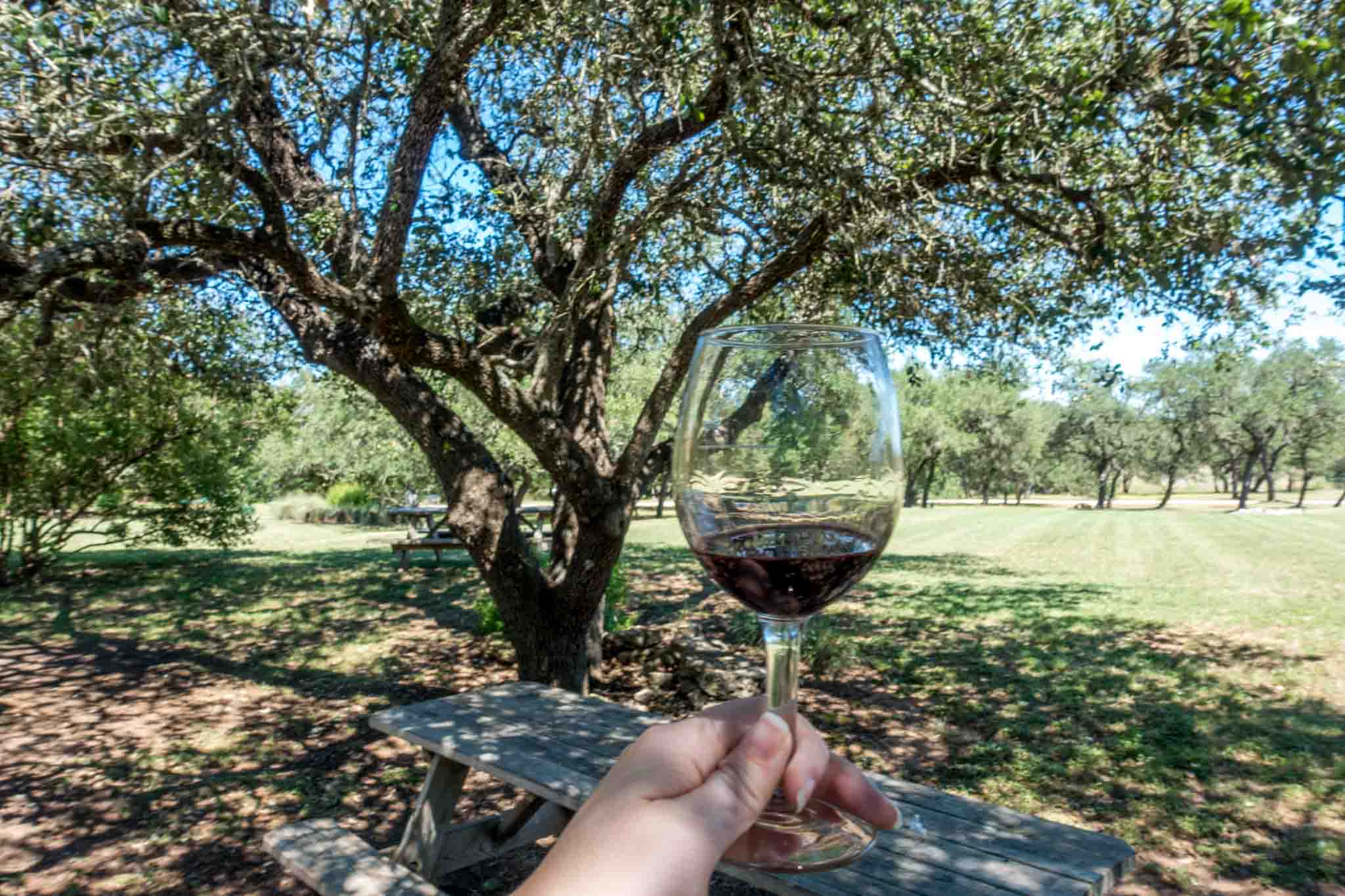 Glass of wine by tree at Duchman Family Winery in Dripping Springs TX