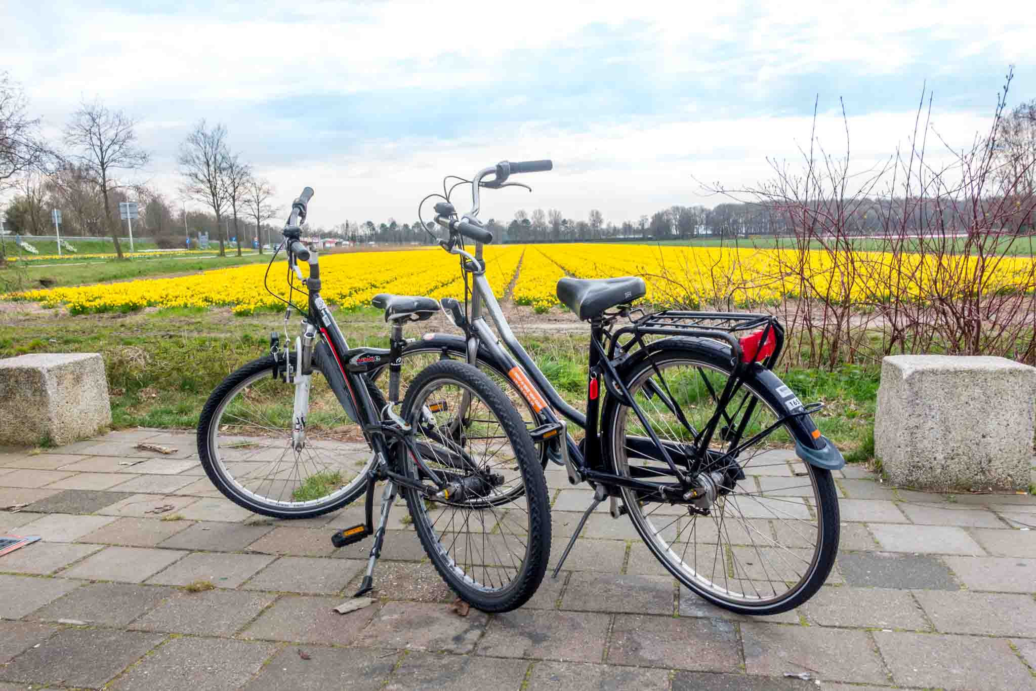 Bicycles beside flower field in Lisse Netherlands