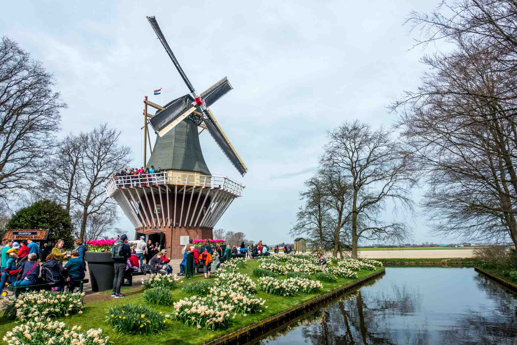 In Holland, Keukenhof gardens is one of the most beautiful places to see a windmill and view tulips