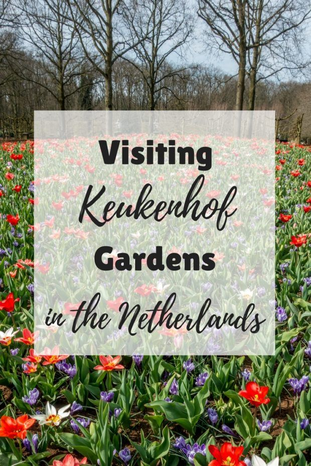 How to Make the Most of Your Trip to Keukenhof Gardens