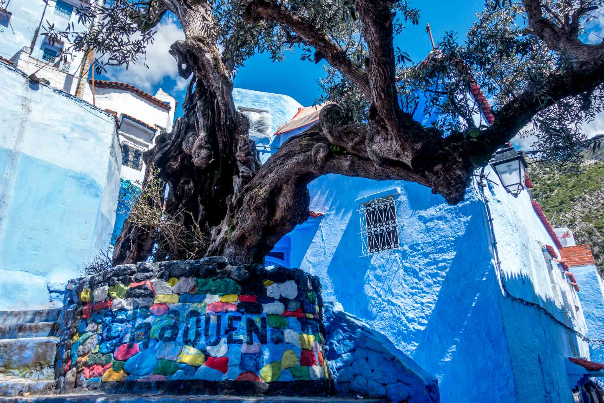 "Tree with a base labeled ""Chaouen"""