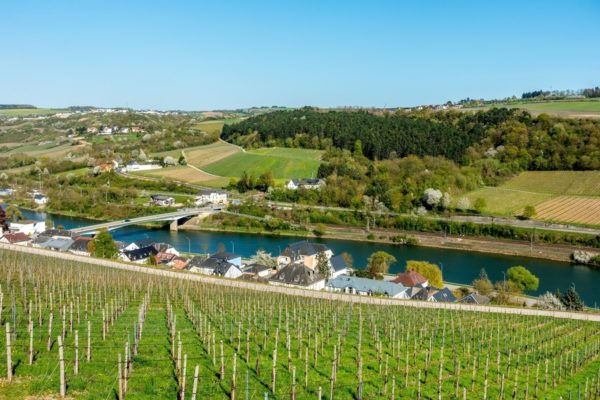 In the Moselle River valley, it seems that every inch is covered in vines to produce Luxembourg wine