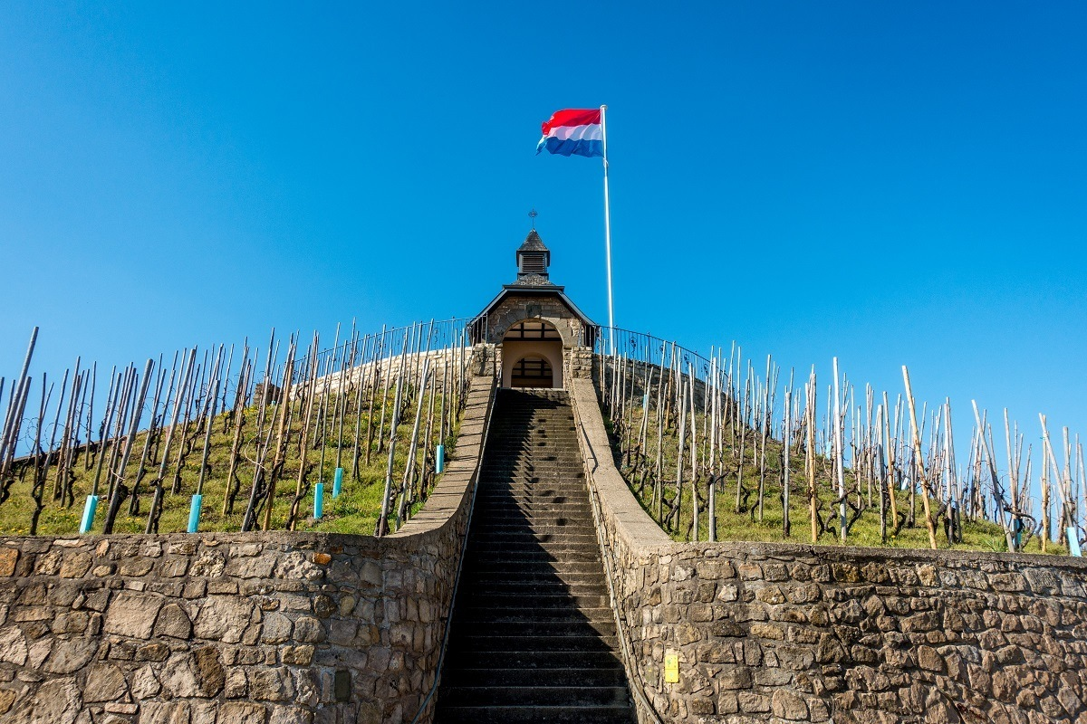 Vines growing near the Saint Donat Chapel | Moselle Luxembourg