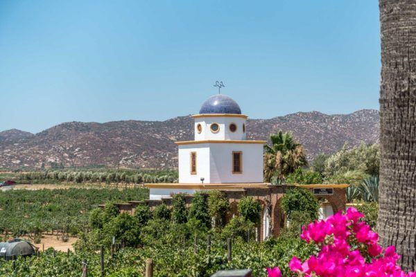 In Baja Mexico, we discovered the amazing virtues of Mexican wine. This is the complete guide to the Valle de Guadalupe wineries.