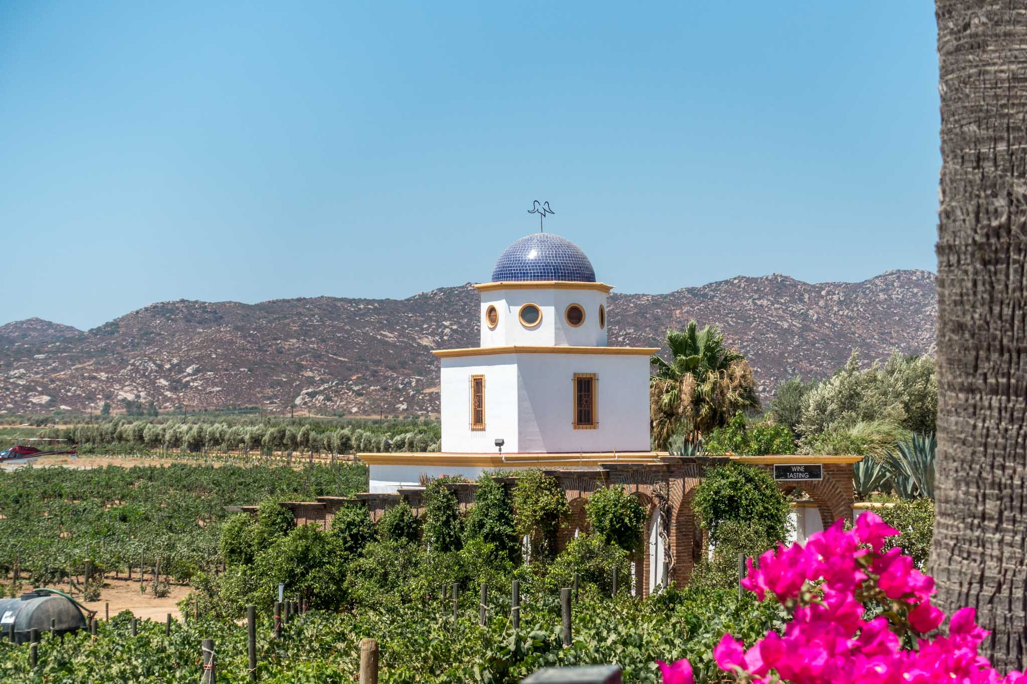 Complete Guide to the Valle de Guadalupe Wineries in Baja, Mexico
