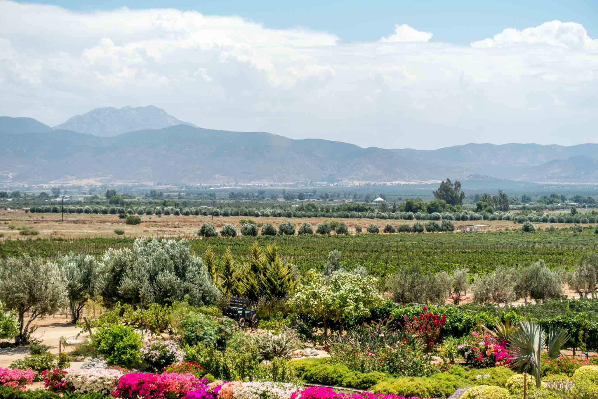 The hills and vineyards of the Valle de Guadalupe of Baja, Mexico