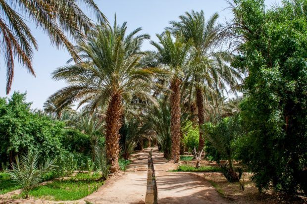 Moroccans get creative with irrigation in the desert