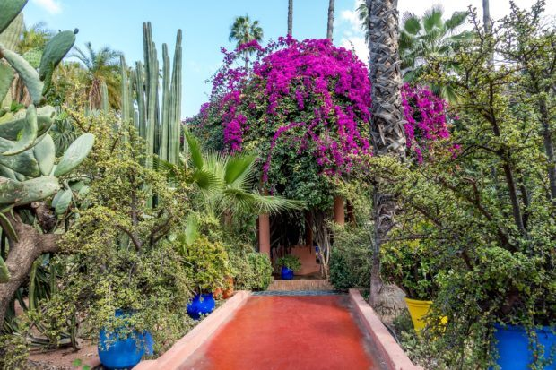 Travel to Morocco advice: leave plenty of time for your visit to Jardin Majorelle