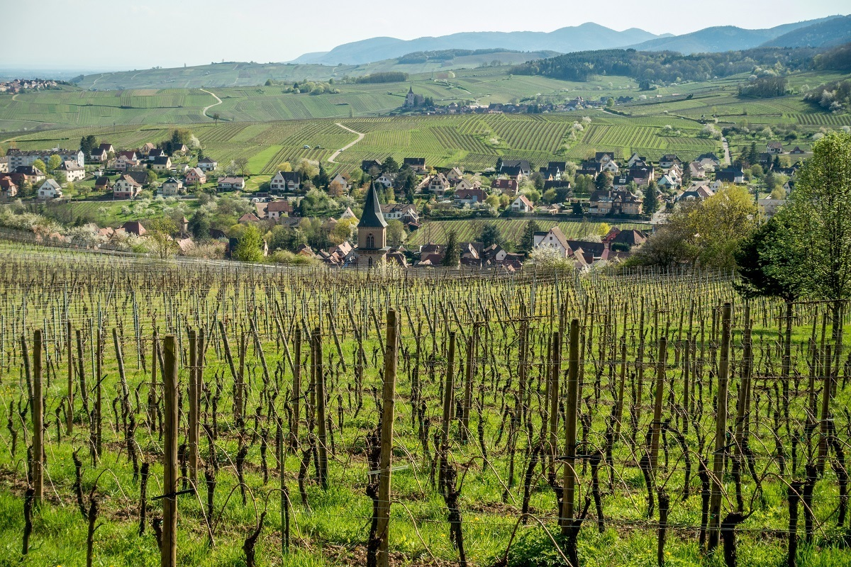 Vineyard and one of the wine-growing villages along the Route du Vin Alsace