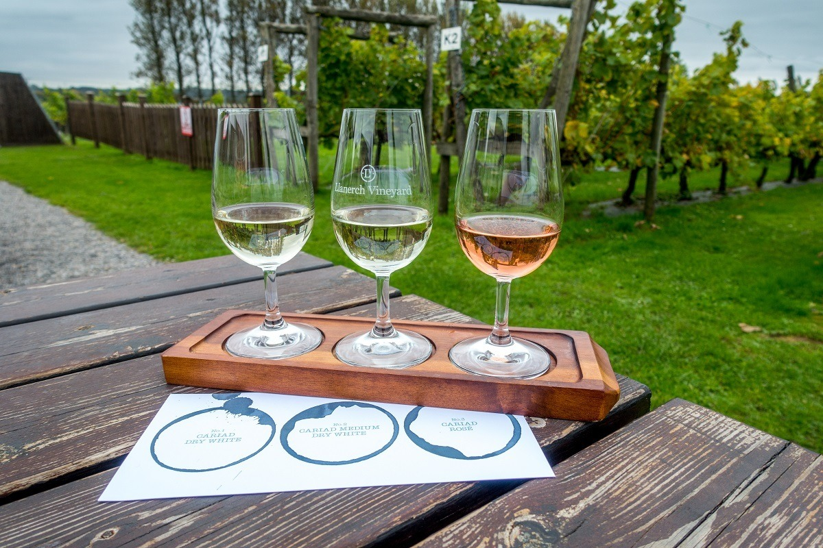 Three wine glasses on a picnic table near a vineyard