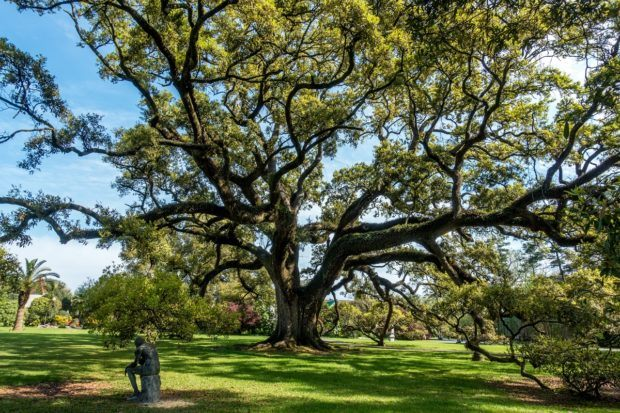 A giant oak and a seated sculpture that can be seen at Houmas House on one of the New Orleans plantation tours