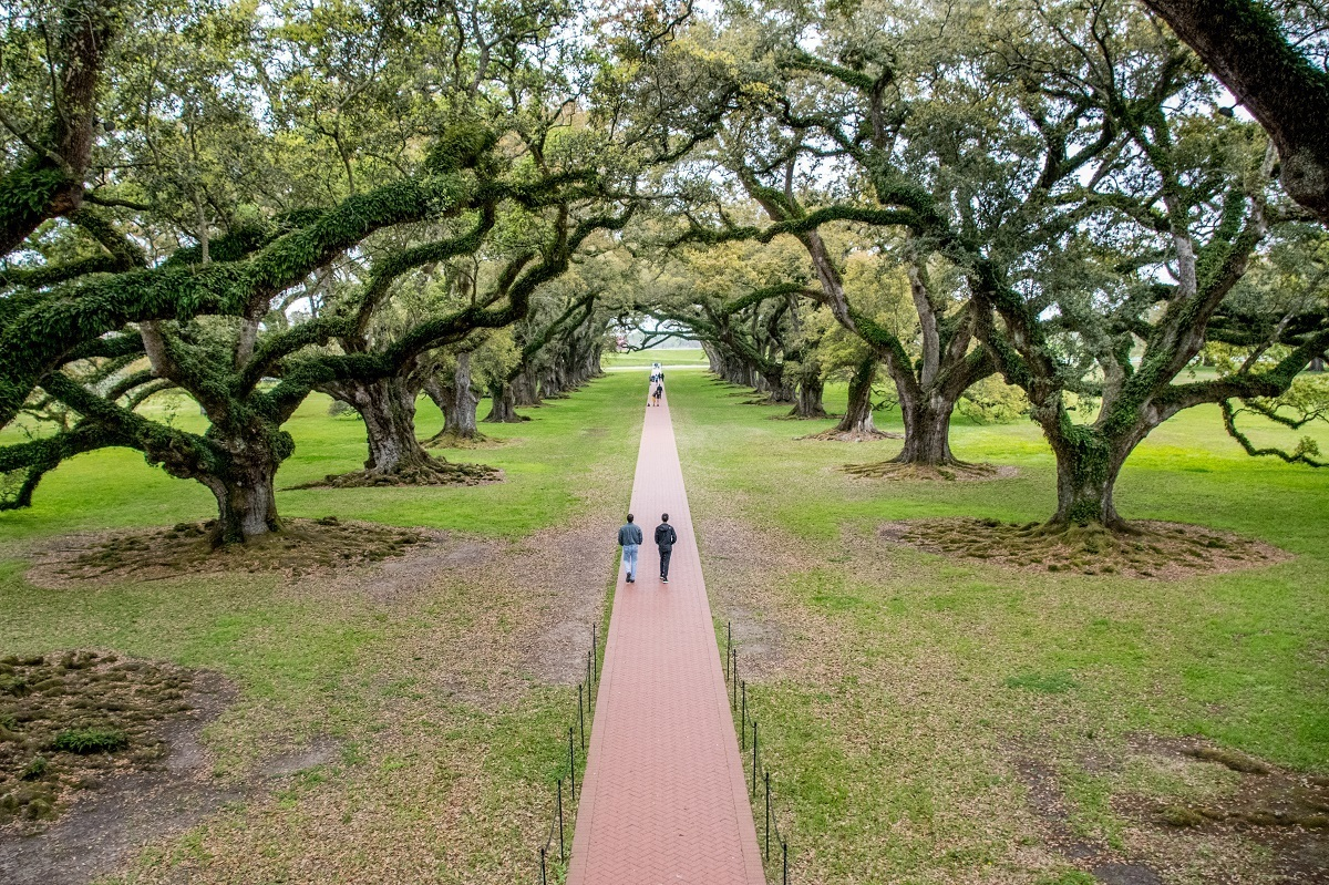 Oak Alley as seen from the Big House on one of the best plantation tours in New Orleans