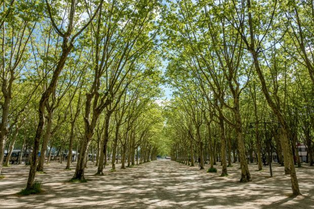 Uniformly-planted trees in Place des Quinconces in Bordeaux France | Bordeaux what to do