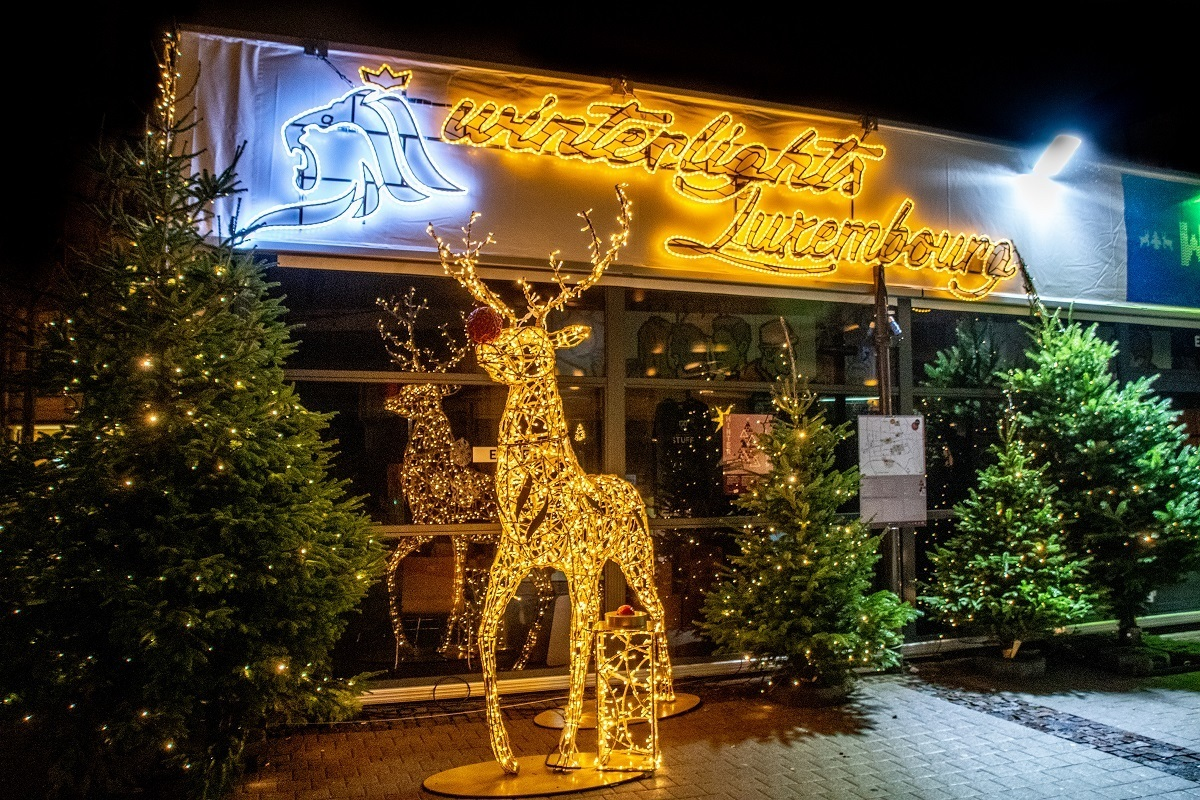 "Reindeer and ""Winter Lights"" sign illuminated with Christmas lights"
