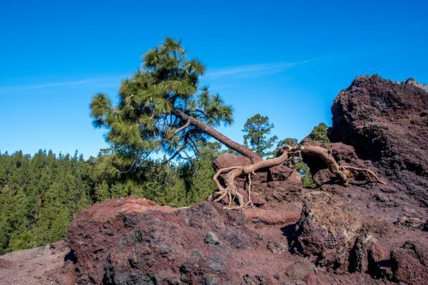 Tenerife Teide photos:  There are unusual rock formations and vegetation on the volcano.  Many Tenerife volcano tours skip the west end of Teide, but it was our favorite part of the mountain.