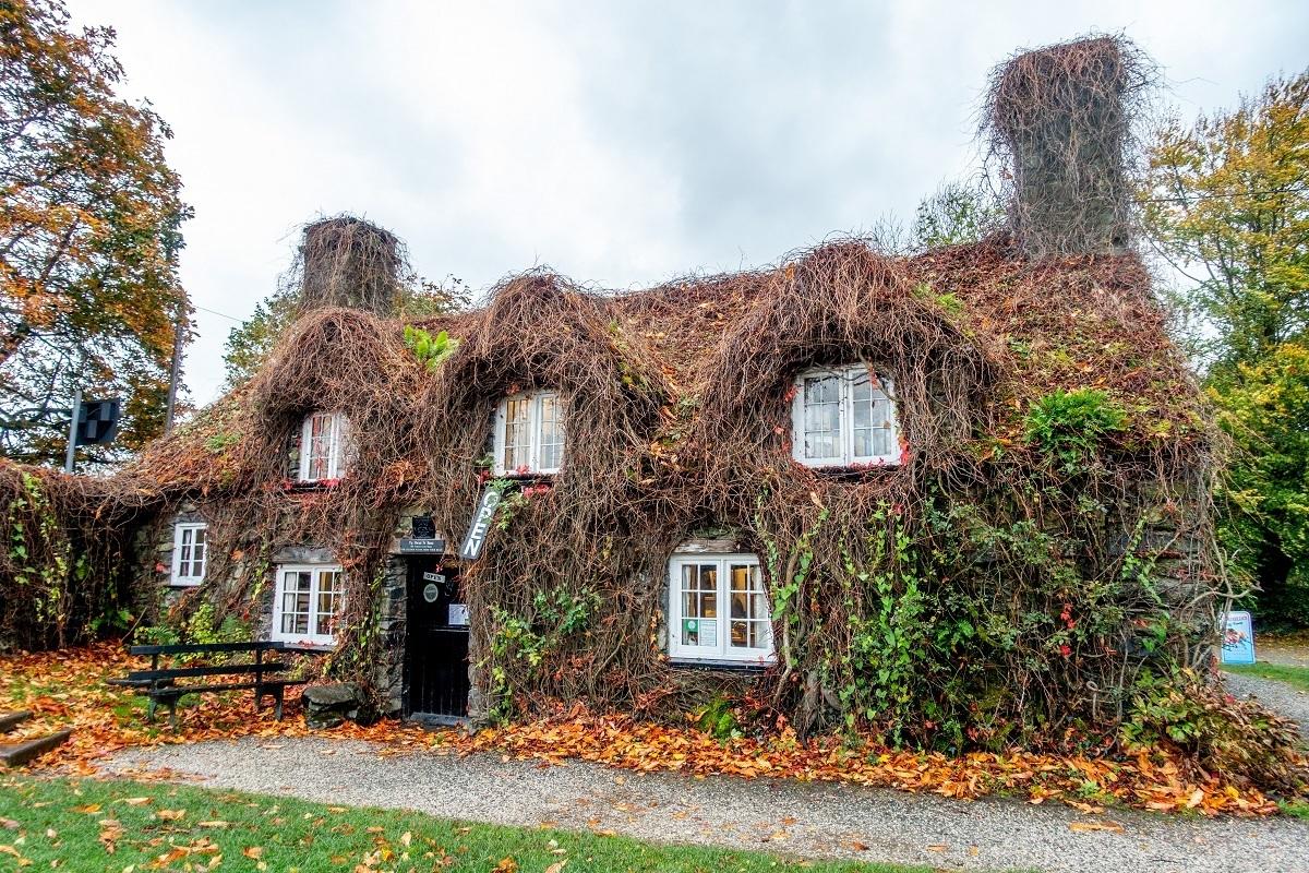 Small, ivy-covered tea house Tu Hwnt I'r Bont in Wales