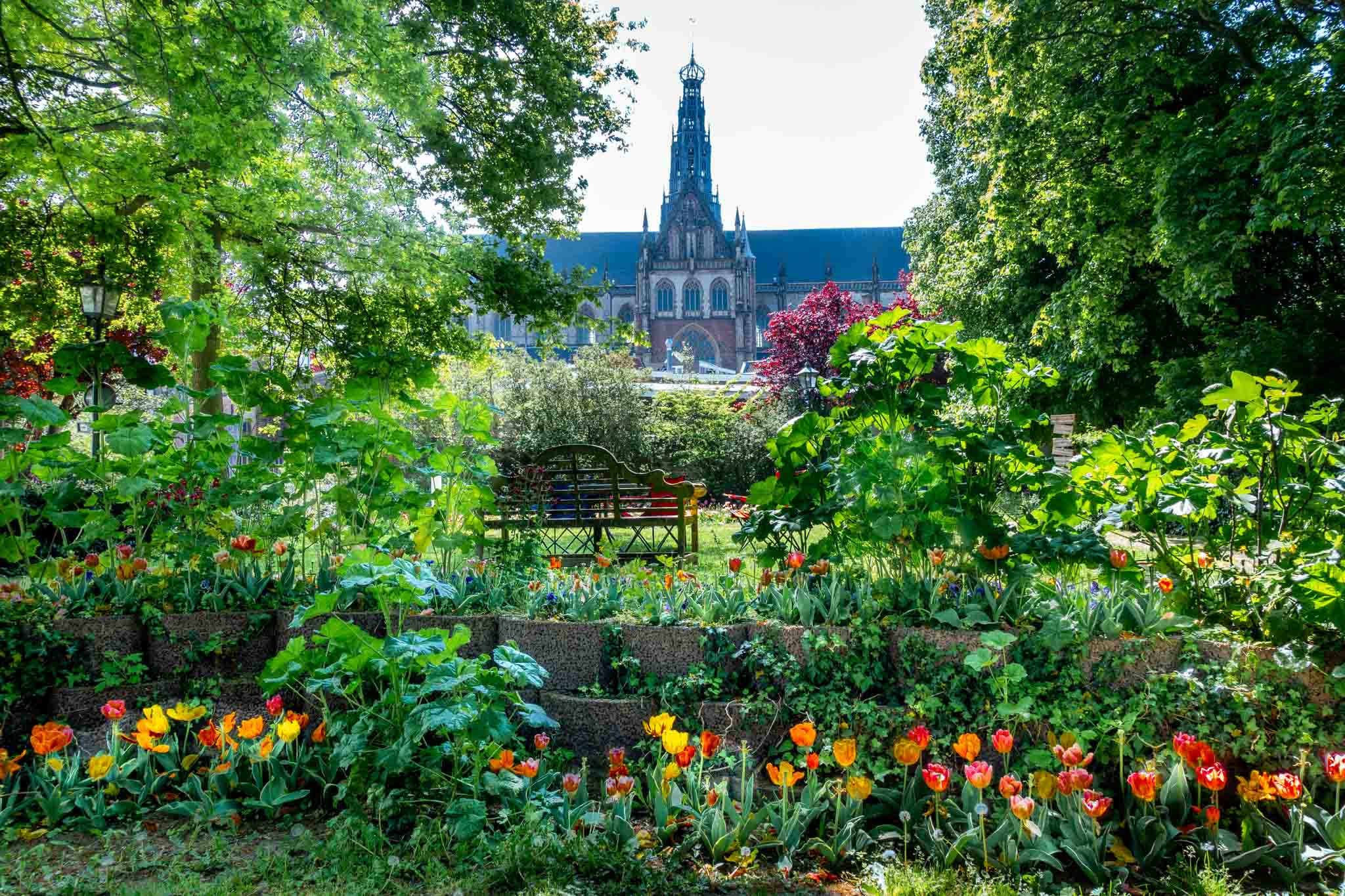 Garden with tulips and trees with St. Bavo Church in the background