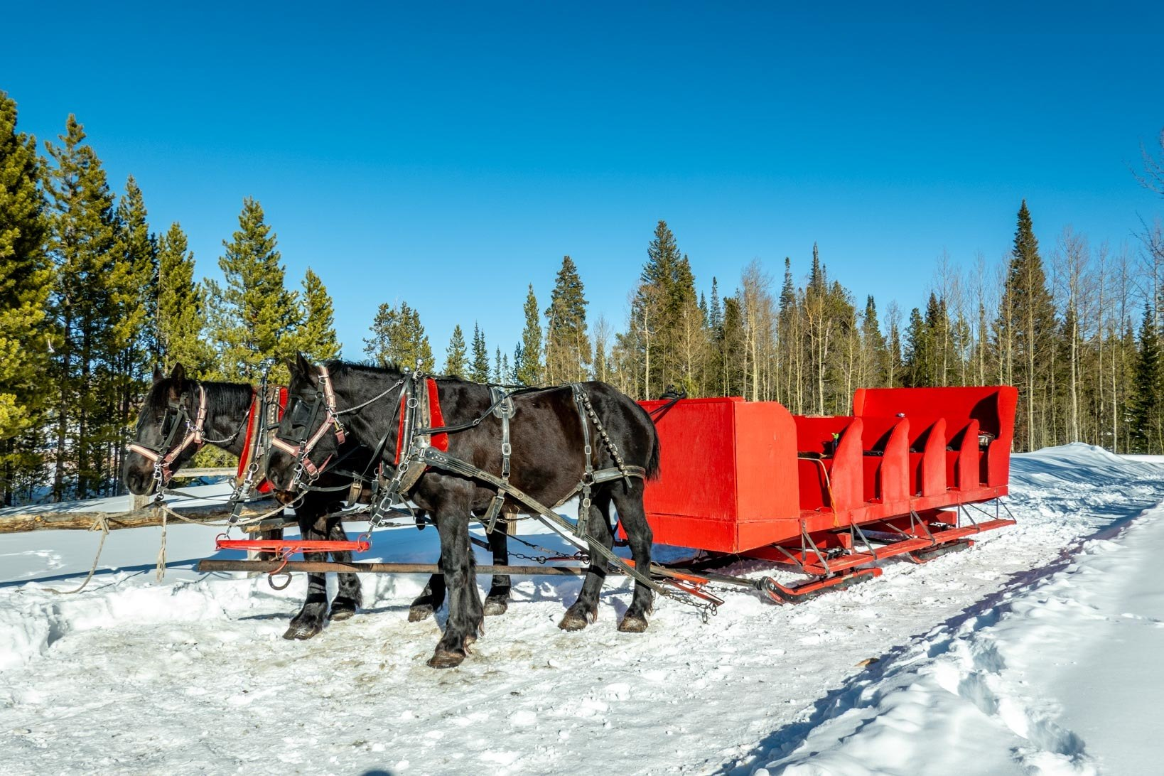 Horse-drawn sleigh at Snow Mountain Ranch of the YMCA of the Rockies