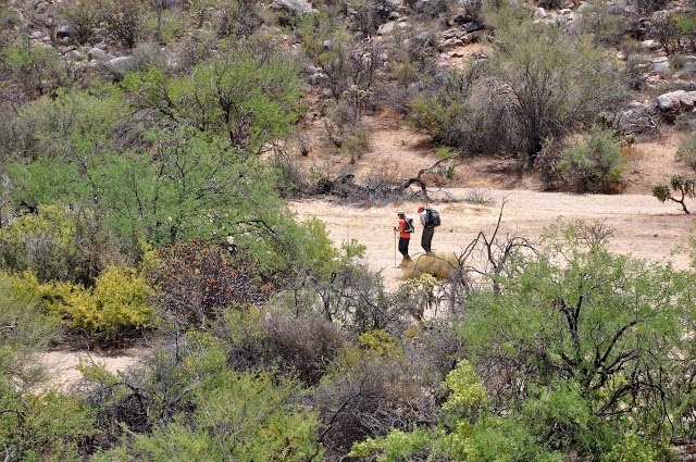 Hikers at the Ritz Carlton Dove Mountain on the Wild Burro Trail