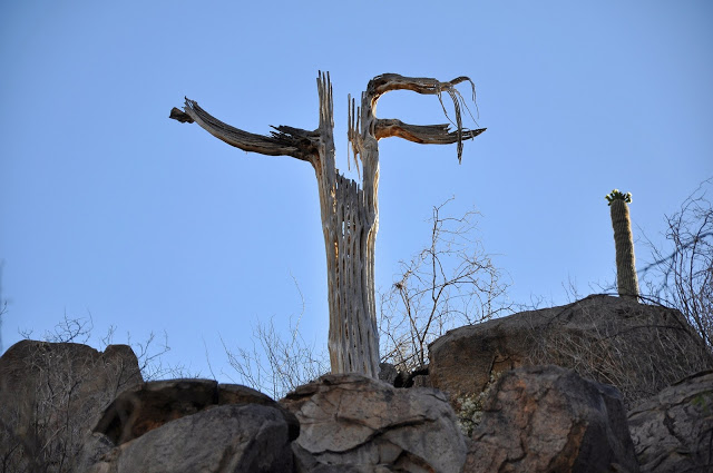This dead weather tree sits guard atop a hill at the Ritz Carlton Dove Mountain