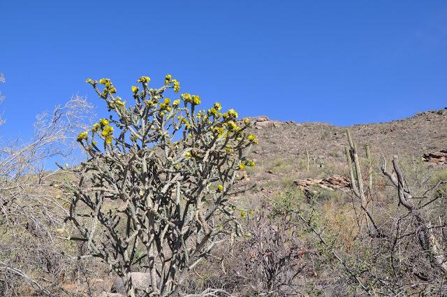 The beauty of the Arizona desert at the Ritz-Carlton Dove Mountain